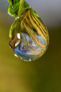 Capturing the detail of a rain drop with the Canon MPE-65mm
