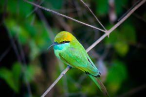 Using a telephoto lens at 190mm to capture this bird from a far